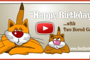 Two Bored Cats Happy Birthday Greeting Video