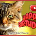 A day filled with happiness - Happy Birthday Cat