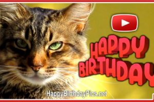 A day filled with happiness – Happy Birthday Cat